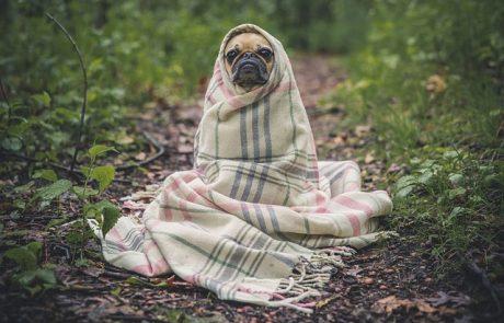 ביוזמת השר אורי אריאל: התנדבות לשירות לאומי – גם בכלביות העירוניות